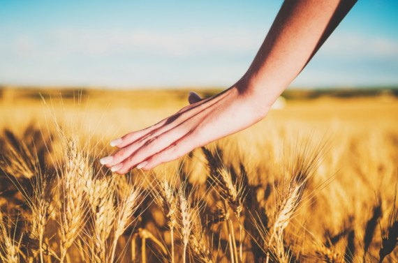 Hand Wheat Field In HIS Name HR LLC CLA Blog Post